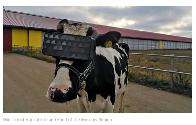 Zeigt eine Kuh mit einer VR Brille